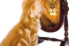 self-esteem-poes-leeuw